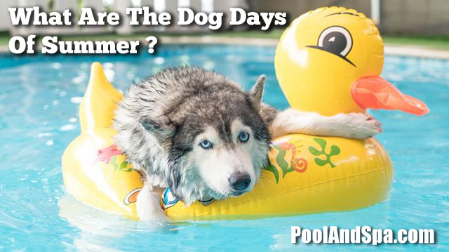 What Are The Dog Days Of Summer?